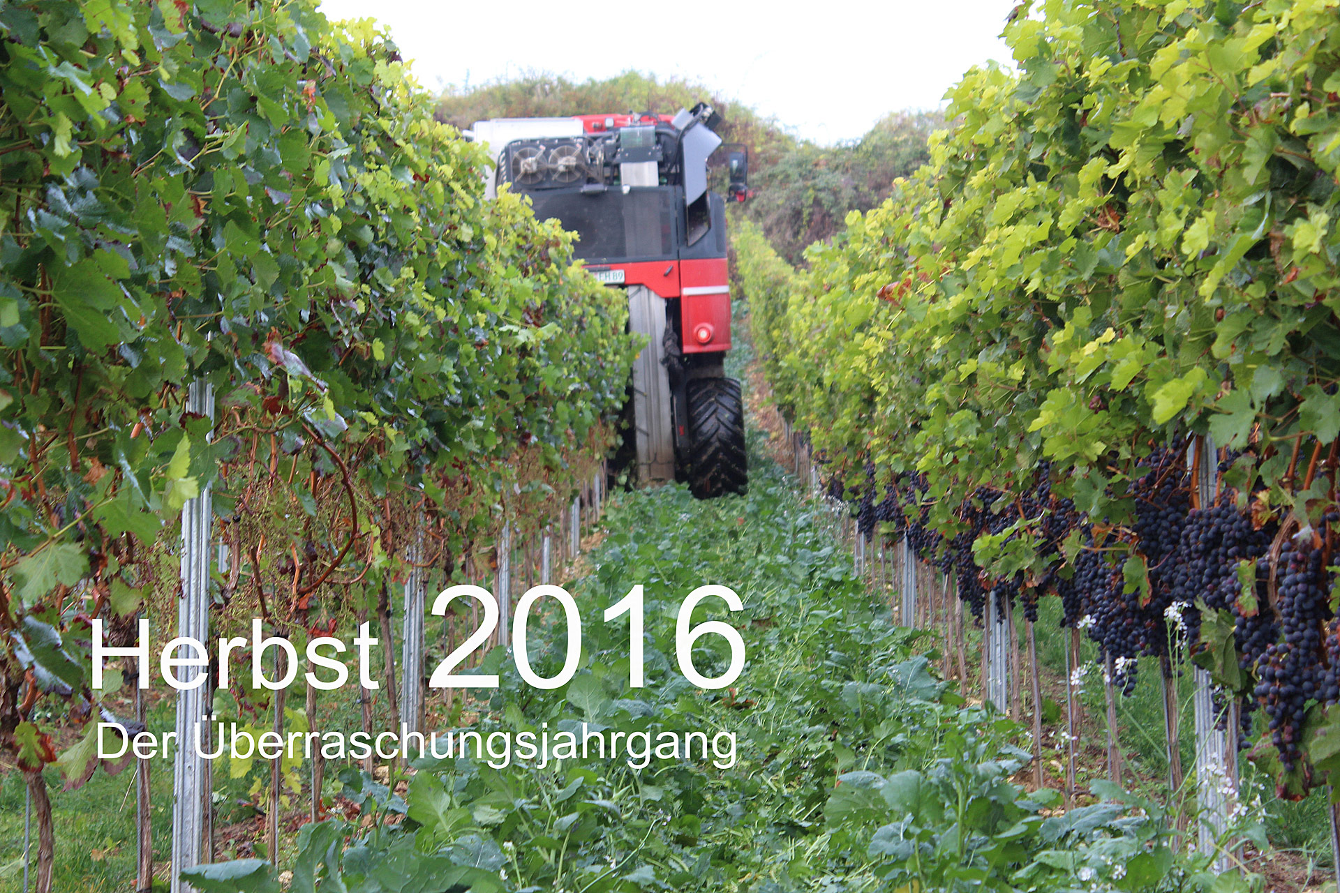Herbstbericht 2016:Der Überraschungsjahrgang!