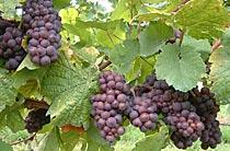Kreutzenberger Weinauszeichnung AWC Gold